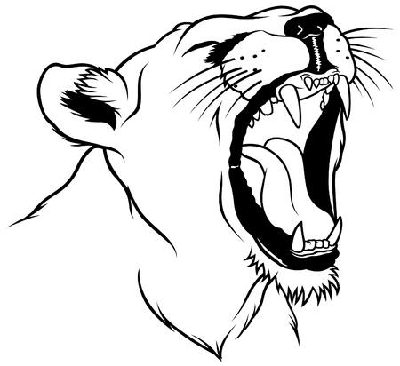 Lioness Head - Hand Drawn illustration Stock Vector - 6511673