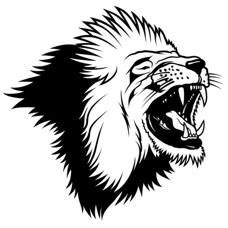 white lion: Lion Head - Hand Drawn illustration