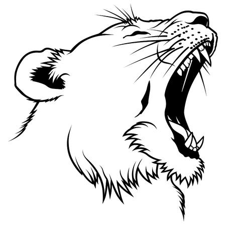 lioness: Lioness Head - Hand Drawn illustration