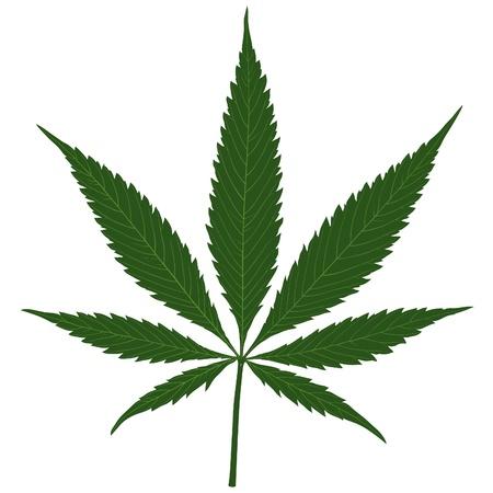 marihuana: La marihuana (Cannabis) - ilustración de la hoja del cáñamo