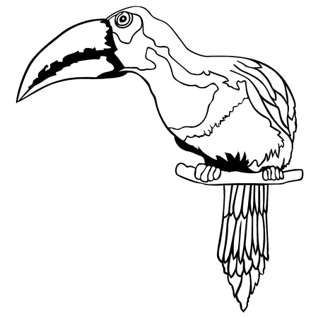 tropical bird: Tukan - Black and White Cartoon Illustration,