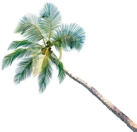 isoler: Palm Tree - illustration color�e et d�taill�e, vecteur