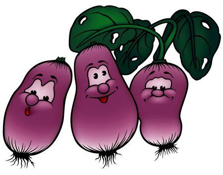 radish: Radish - Colored Cartoon Illustration, Vector Illustration
