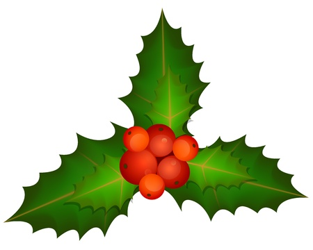 Spring of Christmas Holly -  illustration Vector