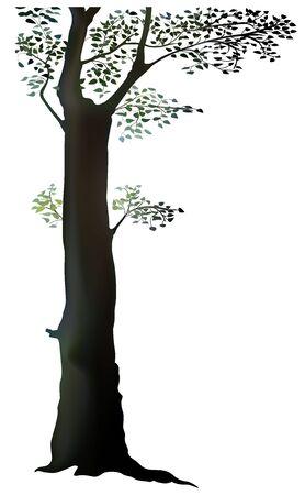 deciduous tree: �rbol - �rbol de hoja caduca, ilustraci�n vectorial