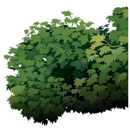 the thicket: Shrub - Cartoon Plant, Vector Illustration