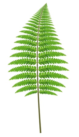fern leaf: Fern Leaf - Colored Cartoon Plant