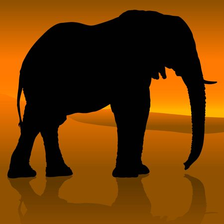 tusks: Elephant Sunset - Colored Background Illustration, Vector