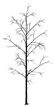 deciduous tree: �rbol de hoja caduca - Negro Silueta, Vector