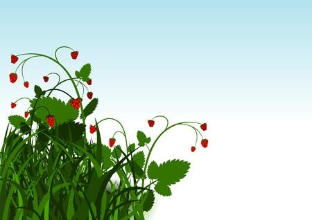 strawberry plant: Wild Strawberry Bush Background - Cartoon Illustration, Vector
