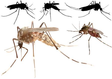 Mosquito Set - Colored Illustration, Vector