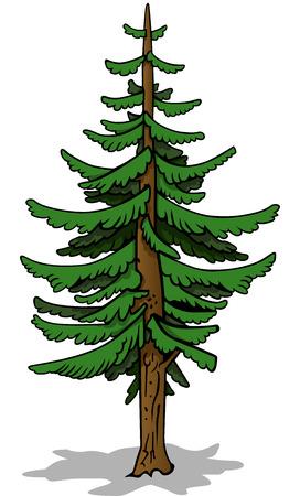 coniferous tree: Green Coniferous Tree  Cartoon Illustration Vector Illustration