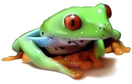 callidryas: Redeyed Tree Frog Agalychnis callidryas  Colored Illustration Vector Illustration