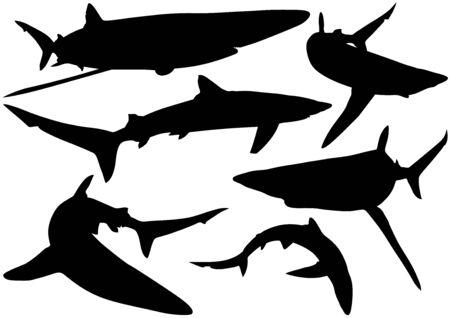 cartilaginous: Blue Shark Silhouettes Prionace glauca  Illustration Vector