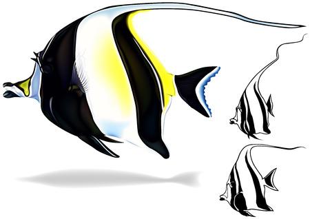 Morish Idol Zanclus canescens  Illustration Set Vector Vector