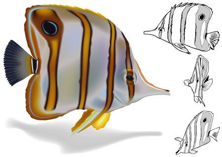 Copperband Butterflyfish Chelmon rostratus  Illustration Set Vector