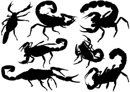 arachnid: Scorpion Silhouettes  Set of Black Detailed Illustrations Vector