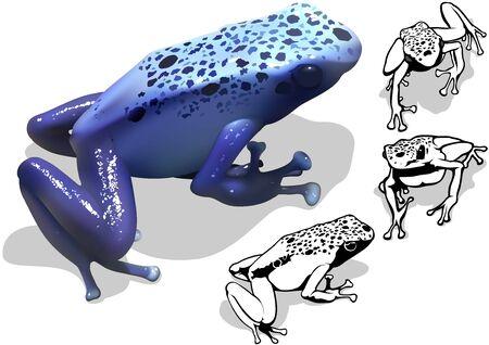 poison dart: Blue Poison Dart Frog Dendrobates azureus  Set of Illustrations Vector