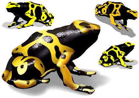 the banded: Yellow Banded Dart Poison Frog Dendrobates leucomelas Set  Illustration Vector Illustration