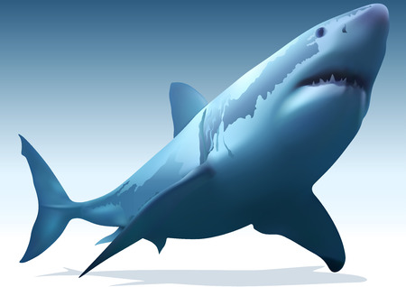 carcharodon: Great White Shark Carcharodon carcharias  Illustration Vector