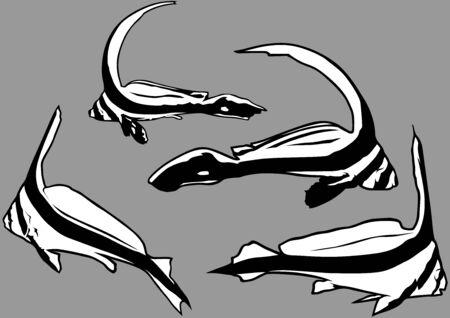 juvenile: Juvenile Jackknife Fish Equetus lanceolatus  Outline Illustration Set Vector Illustration