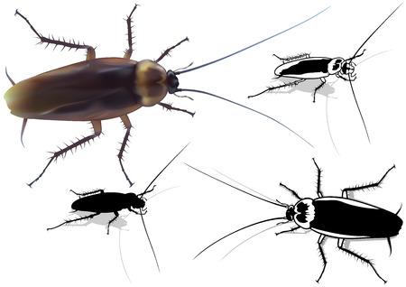arthropod: Cockroach Set Blattella germanica