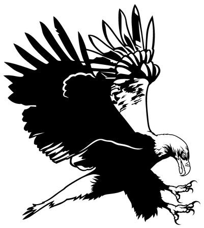 oiseau dessin: Voler Bald Eagle - contour noir Illustration, vecteur