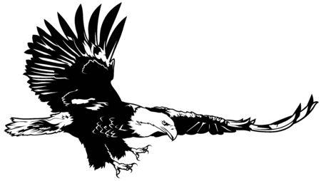 eagle flying: Flying Bald Eagle - Black Outline Illustration, Vector Illustration