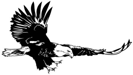 Flying Bald Eagle - Black Outline Illustration, Vector Illustration