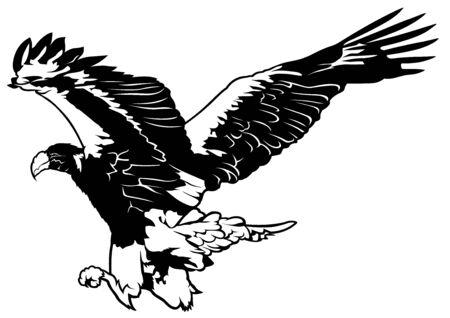 eagle flying: Black and White Flying Eagle - Outline Illustration, Vector Illustration
