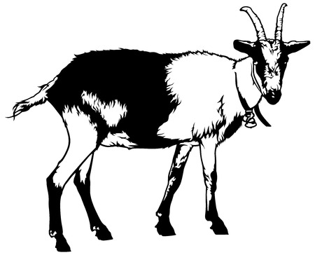 capra: Goat from Side View Capra aegagrus hircus - Black and White Drawing Illustration, Vector Illustration
