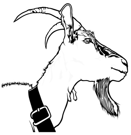 hircus: Goat Head Capra aegagrus hircus - Black and White Drawing Illustration, Vector Illustration