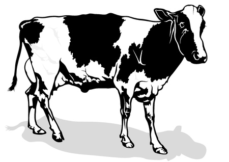 ruminant: Spotted Milk Cow - Black and White Illustration Illustration