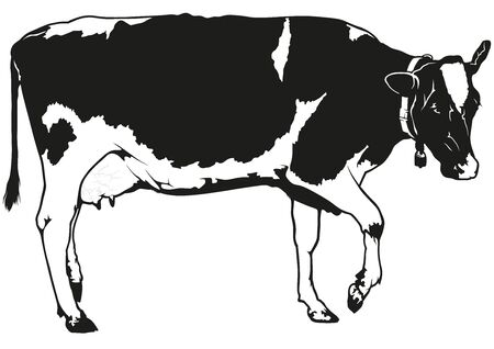 blotchy: Spotted Milk Cow - Black and White Illustration, Vector Illustration