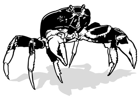 arthropods: Black and White Crab - Outlined Illustration, Vector Illustration