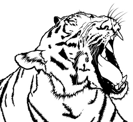 Roaring Tiger - Black and White Drawing Illustration, Vector