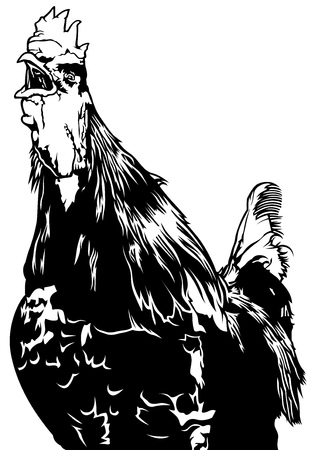 cockscomb: Crowing Rooster - Black and White Illustration, Vector