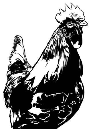 blanco negro: Gallo Vista frontal Ilustración - Negro y Blanco Dibujo