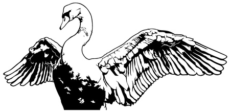 outstretched: Swan with Outstretched Wings - Outlined Black and White Illustration