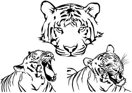 fondo blanco y negro: Dibujos del tatuaje del tigre - Blanco y Negro Ilustraciones