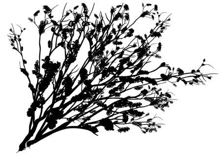 shrub: Black Shrub Silhouette - Detailed Illustration, Vector