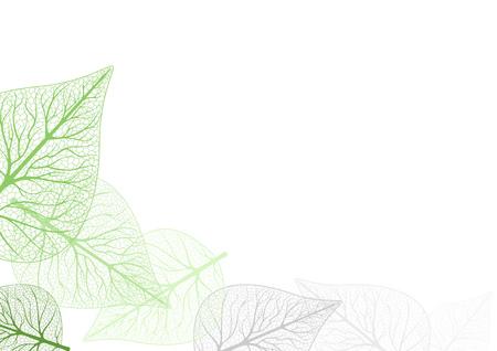 Leaves Background - Leaf Venation Illustration, Vector