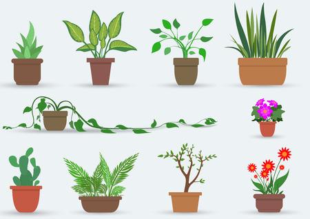 家の植物の鉢に観葉植物のイラスト セット