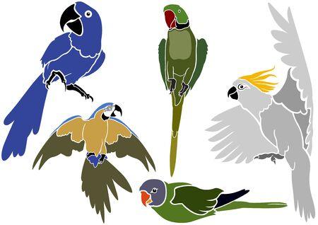 Conjunto de iconos - Loros simples ilustraciones coloreadas