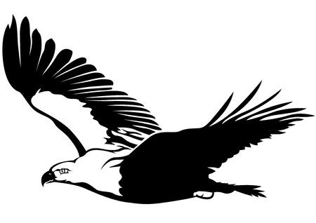 Black and White Flying Eagle - Outline Illustration, Vector Ilustração