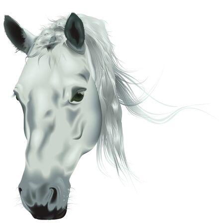 ホワイト ホース ヘッド - 色のリアルなイラスト、ベクトル