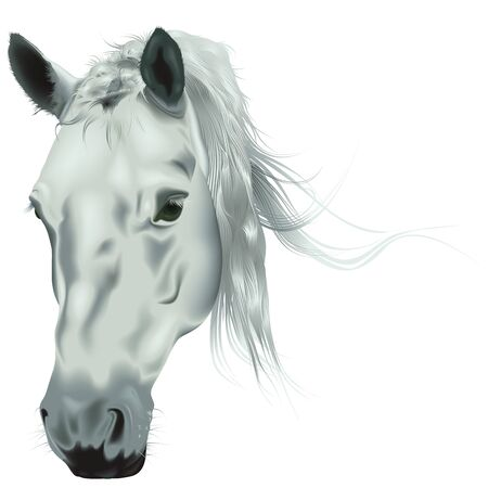 White Horse Head - Colored Realistic Illustration, Vector Illustration
