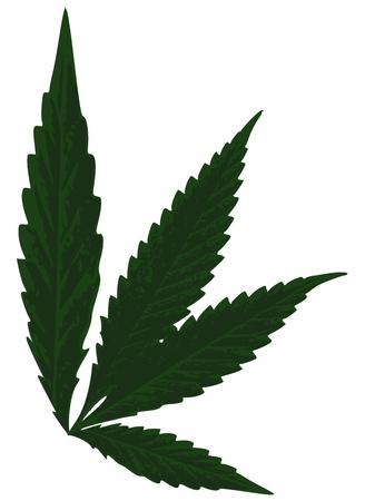 Marijuana Leaf (Cannabis) - Hemp Leaf Illustration, Vector