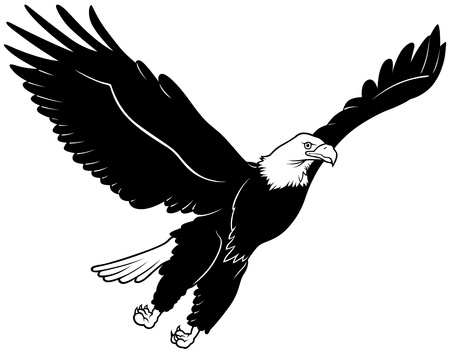 Flying Bald Eagle - Black Outline Illustration, Vector 向量圖像