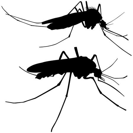 Mosquito Silhouettes - Black Illustration, Vector Ilustração